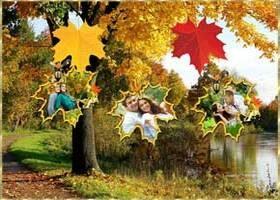 Осень. Падают кленовые Листья