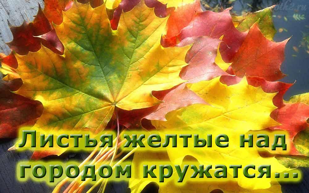 Листья Желтые скажите что вам снится