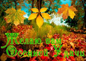 Осень Удача