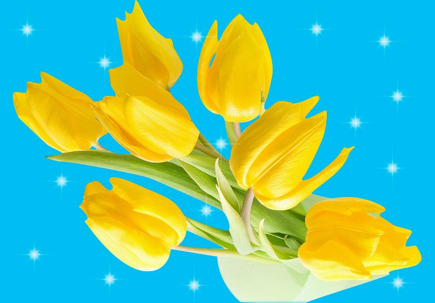 Жёлтые Тюльпаны... С 8 Марта!